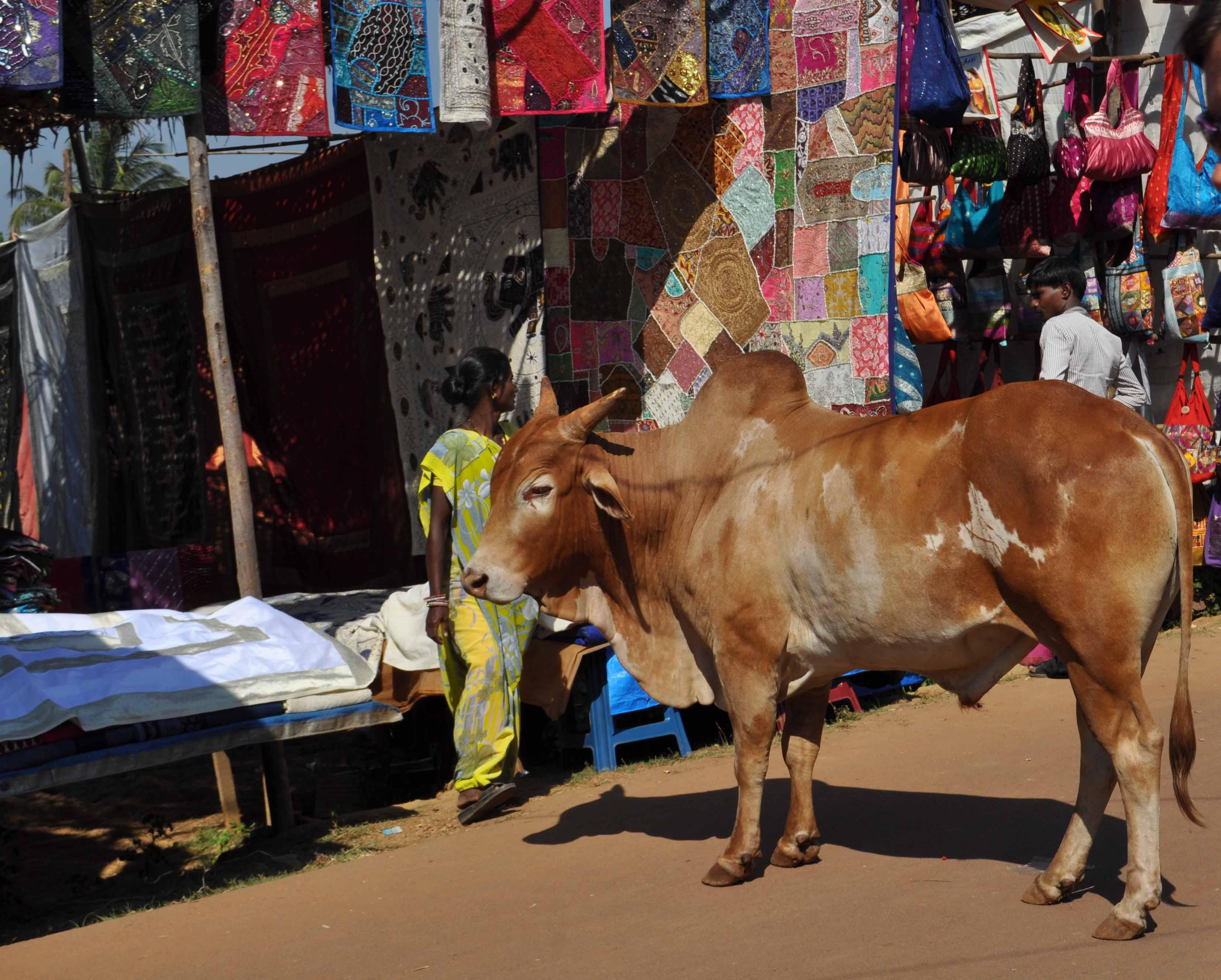 корова на рынке в гоа