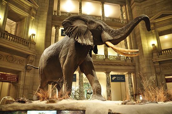 национальный музей естественной истории