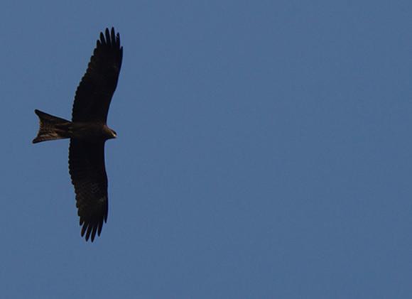 птицы в Дели